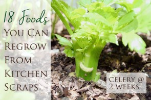 How to regrow 18 foods from kitchen scraps