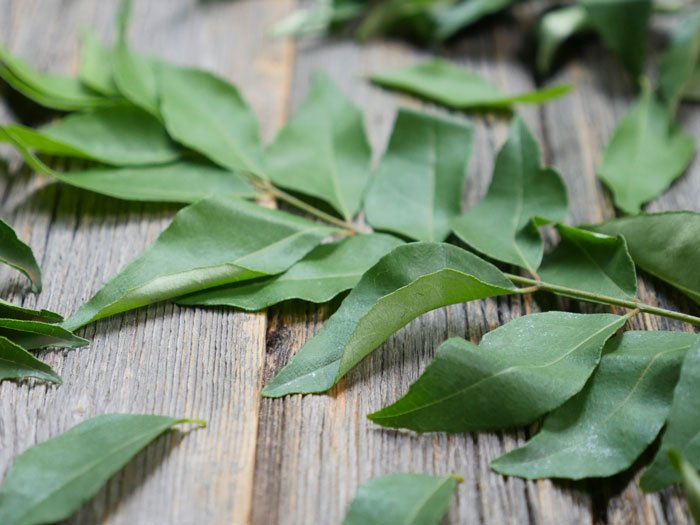 Indian Food 101: What's the difference between curry leaves and curry powder?
